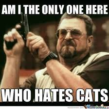 Stupid Cat Meme - 25 best what cats do images on pinterest funny animals funny
