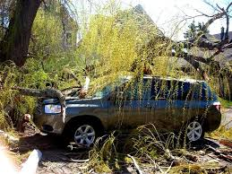 discount tree specialist in webster ny all about trees