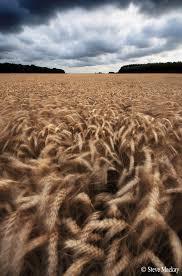 chambre d h e aveyron wheat fields photography photography wheat fields