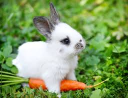 rabbit bunny the differences between rabbits and hares