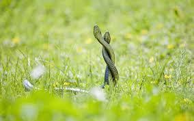 a green snake wallpapers green snake romance