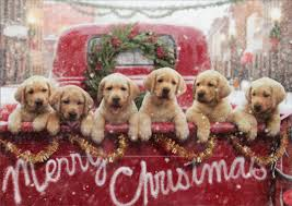 dog christmas lab puppies in truck box of 10 avanti dog christmas cards by