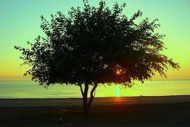 the value of a tree irvingparkgardenclub s