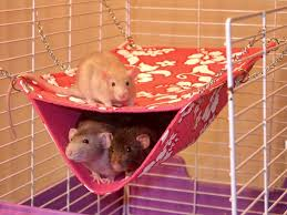 10 pet hammock ideas funny pictures quotes memes funny images
