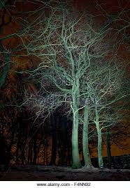 trees lit up stock photos trees lit up stock images alamy
