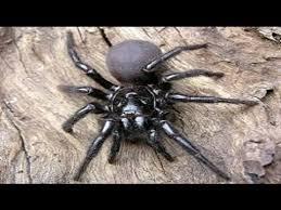 imagenes animales australia los 10 animales más peligrosos de australia youtube