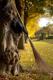 halloween witch hat and broom against a tree stock photo picture