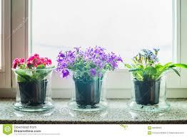 home decoration flowers home flower pots decoration stock photo image 55578160