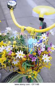 flowers gardens u0026 plants stock photos u0026 images flowers gardens