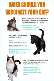 best 25 cat vaccinations ideas on pinterest pet vaccinations