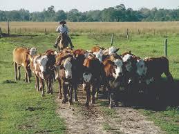 uatre nueva escala salarial para los trabajadores agrarios aumento a trabajadores rurales cómo son las nuevas escalas