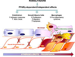 determinants of evolving metabolic and cardiovascular benefit risk