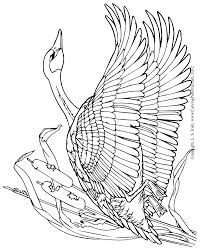 Wood Carving Instructions Free by In Depth Free Online Relief Wood Carving Canada Goose Project By