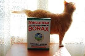 How Long Do Fleas Live In Carpet Borax For Fleas All Natural Flea Control From Landry Detergent