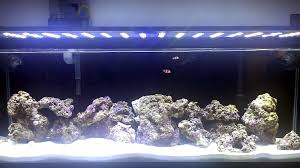 Aquascaping Rocks Is There A Science To Aquascaping Live Rock Reef Sanctuary