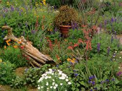 Xeriscape Landscaping Ideas Willowbrook Water And Sanitation District