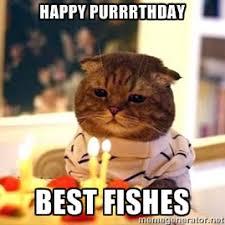 Happy Birthday Meme Creator - birthday cat meme generator cat memes pinterest cat meme