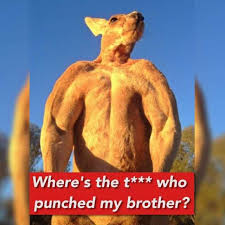 Kangaroo Meme - dopl3r com memes where s the twat that punch my brother says