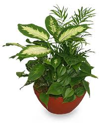 green plants lush garden of green plants all house plants flower shop network