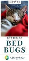 How To Get Rid Of Bed Bugs Yourself Fast How To Get Rid Of Bed Bugs Allergy U0026 Air