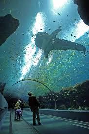 15 amazing places to visit in georgia state georgia aquarium
