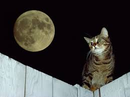 cat on the fence the moon wallpapers and images wallpapers