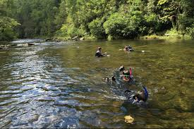 Tennessee snorkeling images Field excursions river snorkeling adventures in the cherokee jpg