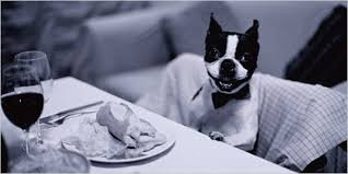 dogs at dinner table 7 holiday hosting rules dog owners need to follow