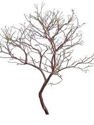 manzanita branches for sale manzanita branches 4 pack 27 to 30 premium centerpieces crafts