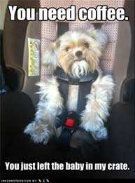 Car Seat Meme - dog in car seat funny pictures dump a day