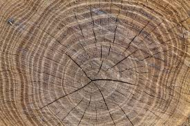 tree rings images images The living forest what tree rings tell us about the life of a jpg