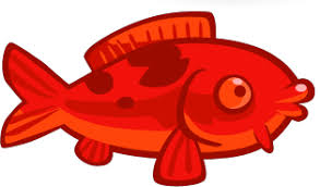red koi fish angry birds wiki fandom powered wikia