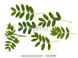pressed flowers stock images royalty free images u0026 vectors