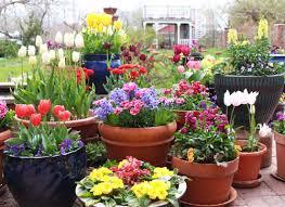 How To Grow A Bulb In A Vase Fall Bulbs Tulip Peony Daffodil Tagawa Gardens Nursery