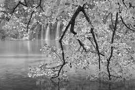 black and white international garden photographer of the year