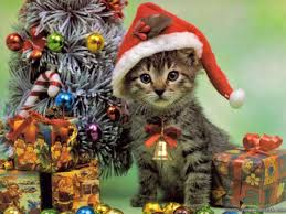 cat christmas reminder send in your christmas cats why evolution is true