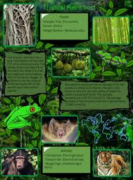 Plant Adaptation In Tropical Rainforest Tropical Rainforest Animal Biom En Fauna Rainforest Tropical