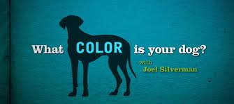 what color is orange watch what color is your dog