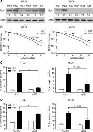 silencing egr1 attenuates radiation induced apoptosis in normal