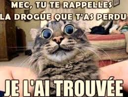 Meme Chat - la drogue o o drogue chat lolcats lol fun humour vos