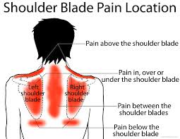 shoulder blade left right or scapula ehealthstar