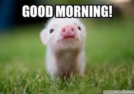 Goodmorning Meme - good morning meme rat good morning images