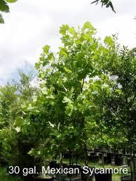 discount trees of brenham nursery flowers plants trees home
