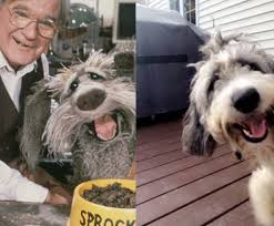Fraggle Rock Meme - my cousin s dog looks just like sprocket from fraggle rock imgur