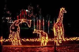 Saluda Shoals Lights Riverbanks Zoo And Garden