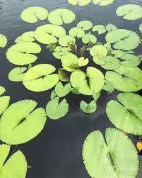 florida native aquatic plants the magic of the naples botanical garden paradise