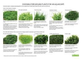 Tropical Aquatic Plants - d392252f5688eed5e5f7f76fb04e1af8 jpg 736 527 aquarium
