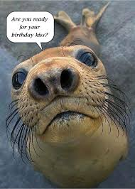18 best birthday funny greeting cards images on pinterest