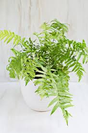 7 unique non toxic houseplants u2013 a beautiful mess