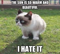 Memes Of Grumpy Cat - top 10 funniest summer grumpy cat memes into the wild screen printing